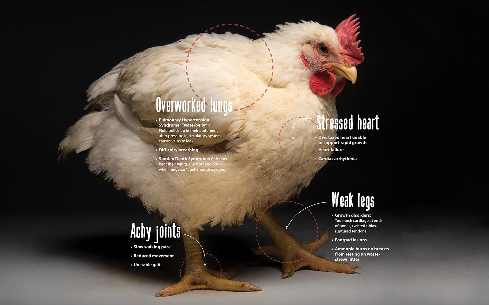 Super Size Problem The Humane Society Of The United States