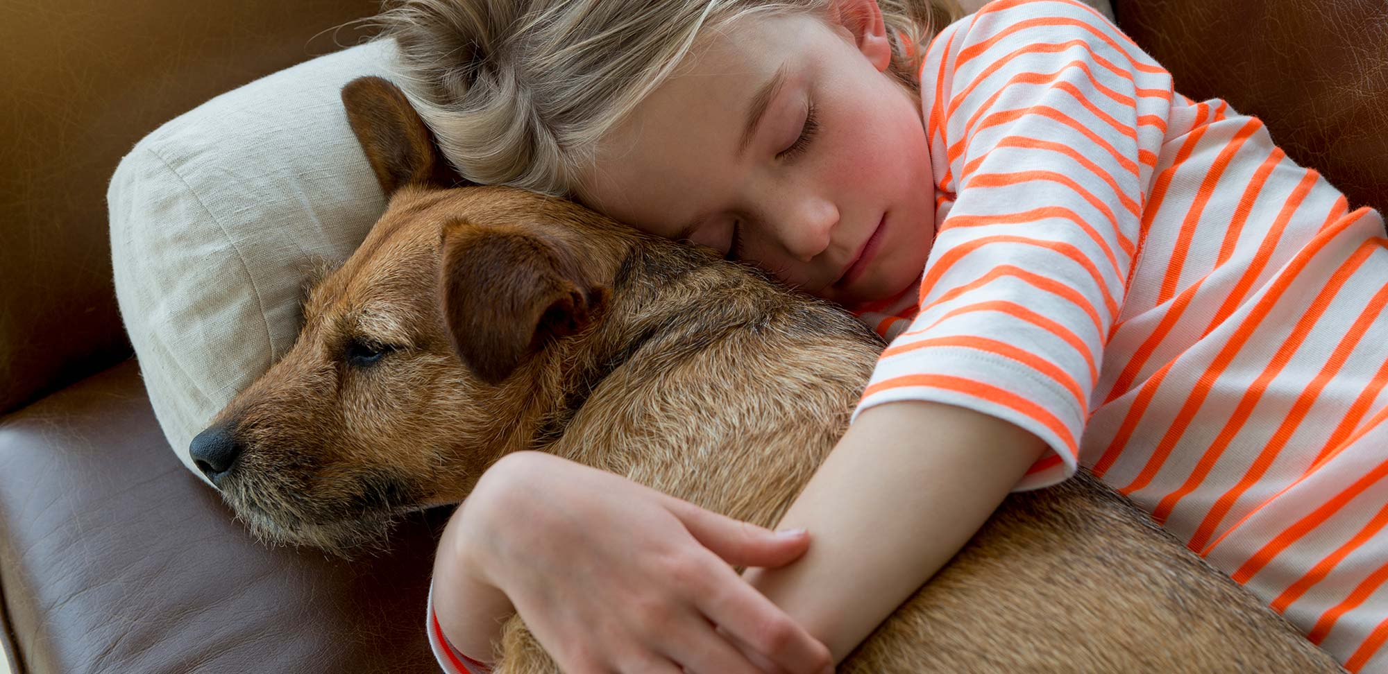 Top reasons to adopt a pet   The Humane Society of the United States