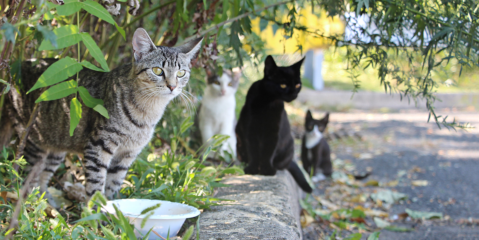 how to help your neighborhood's feral felines: tips for keeping