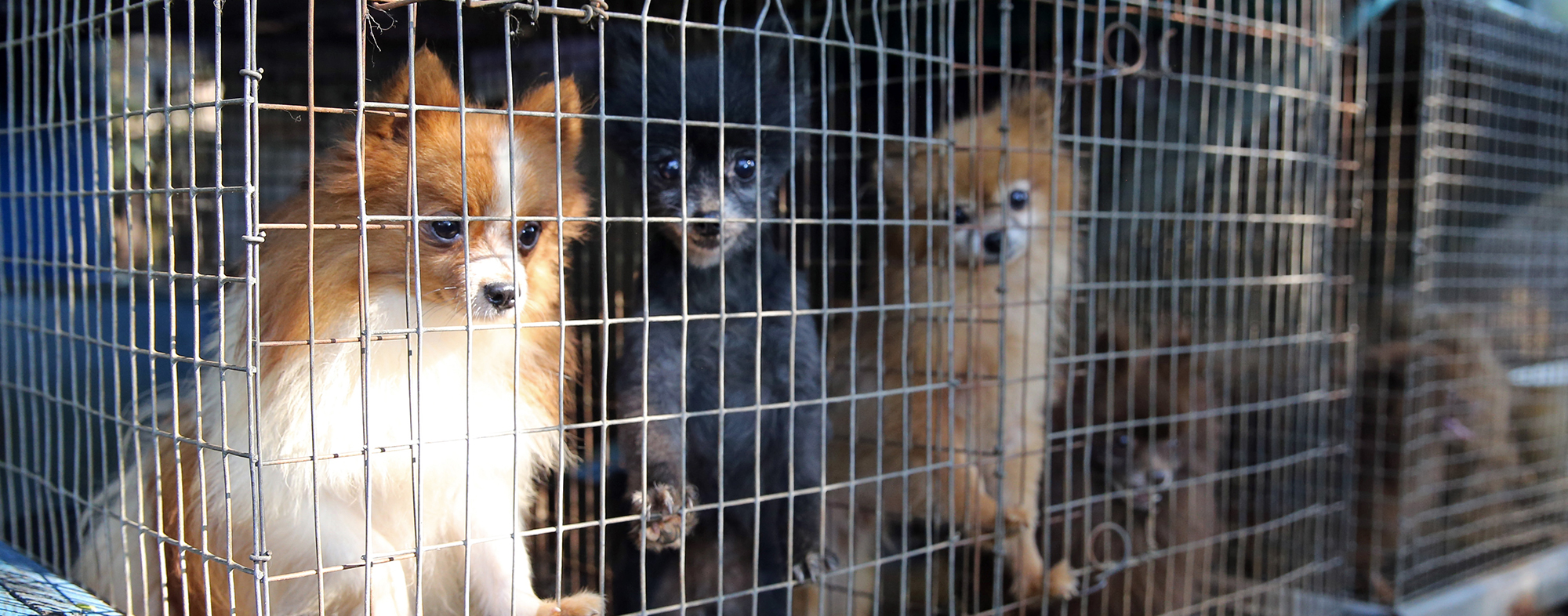Puppy mill research   The Humane Society of the United States