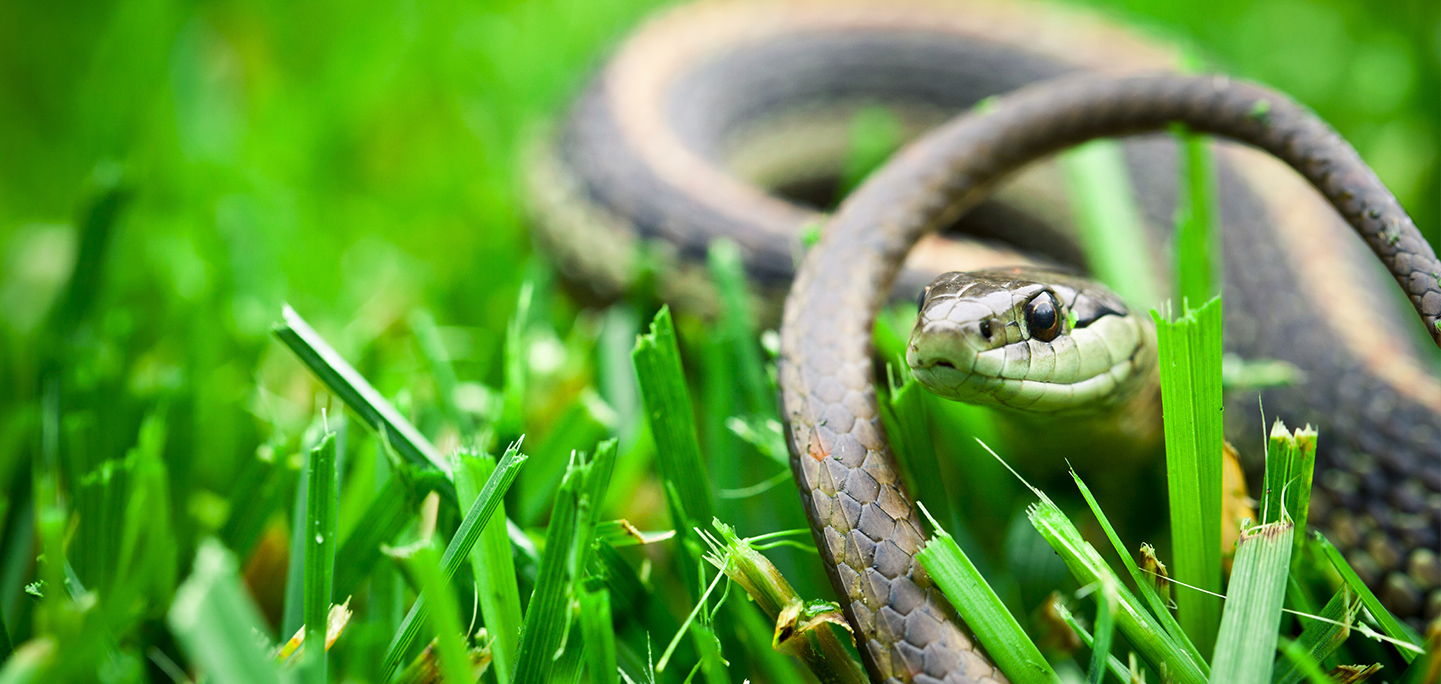 Snakes | The Humane Society of the United States