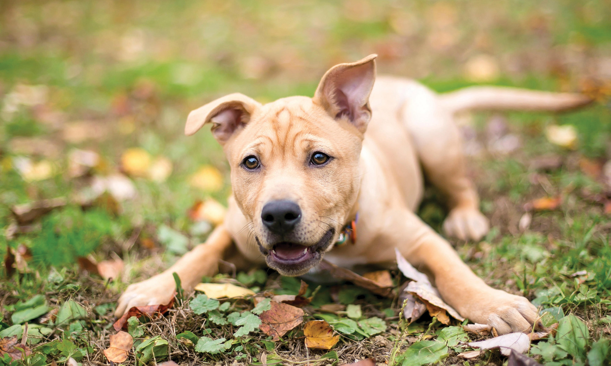 Dogs | The Humane Society of the United States
