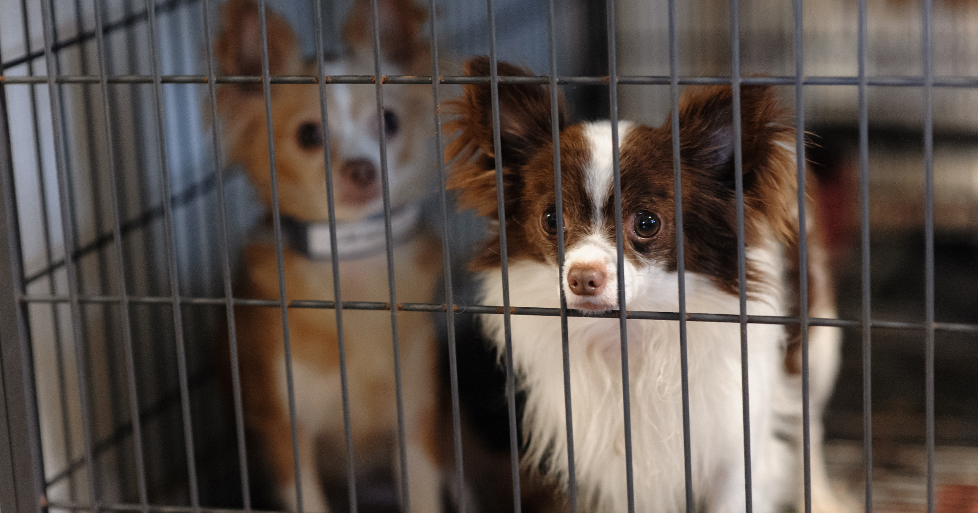 Stopping Puppy Mills | The Humane Society of the United States