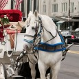 carriage horses are subjected to long hours and risk of injury