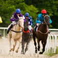 Horses in horse racing industry