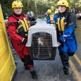 Animal Rescue Team members carrying a dog in a crate, flood waters in the background