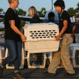 Volunteers carrying crates of dogs being transports by airplane to safety