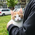 Cat at Pets for Life Event