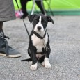 Puppy at Pets for Life event