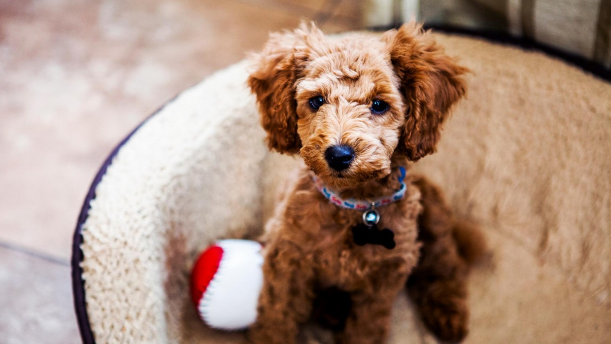Where To Get A Puppy The Humane Society Of The United States