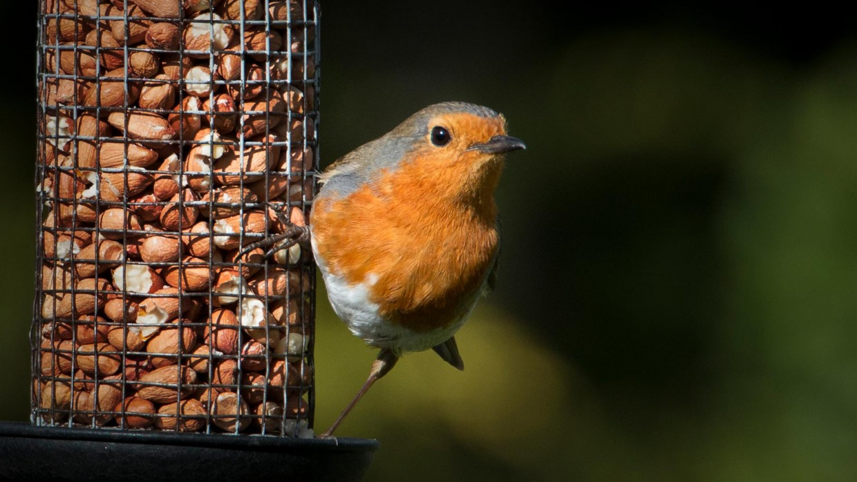 Image result for birds taking all the food