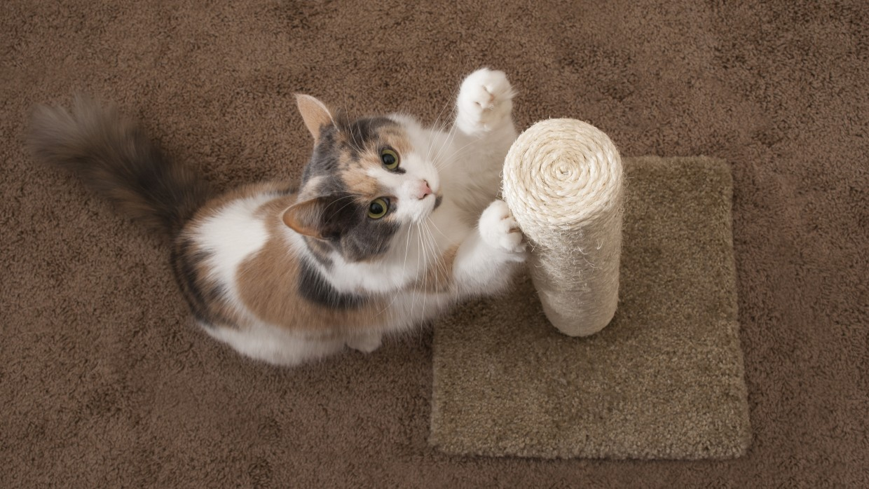 Declawing Cats Far Worse Than A Manicure The Humane Society Of The United States