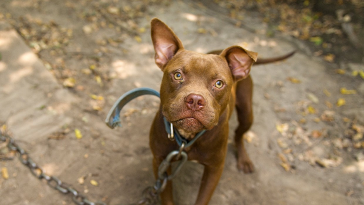Taking action to stop dogfighting