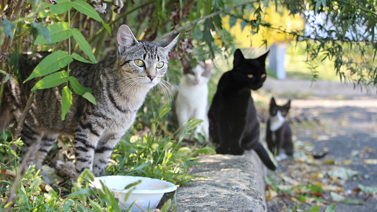 How To Help Your Neighborhood S Feral Felines Tips For Keeping Neighborhood Cats Safe The Humane Society Of The United States