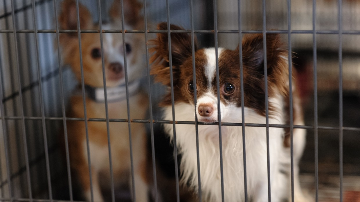 Stopping Puppy Mills