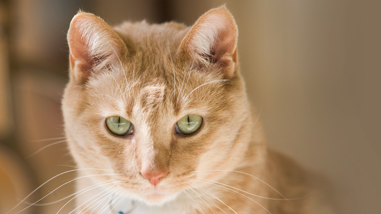 Why you should spay/neuter your pet | The Humane Society of the United States