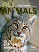 All Animals Winter 2021 magazine cover showing a bobcat