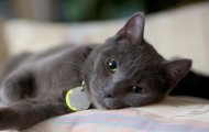 gray cat relaxing