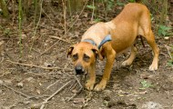 NC dogfighting rescue dog
