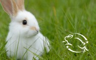 White rabbit with Leaping Bunny logo