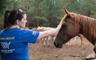 Animal Rescue Team's Jessica Johnson with horses from a rescue in Texas