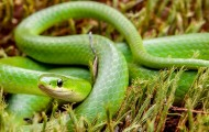 Green snake in grass