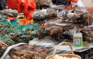 Live animals in cages at a wet market in China