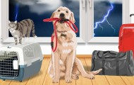 Illustration of a dog with leash in his mouth, cat on a carrier, and luggage in front of a stormy window.