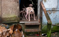 Dogs living in severe neglect, rescued by HSUS