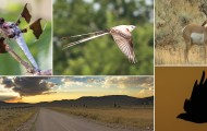 Collage of wildlife from wildlife sanctuaries