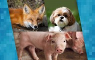 Collage with a pig, fox and dog