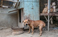 Dogs in filthy conditions at a dog meat farm in South Korea