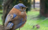 a bluebird sits on a tree with a loud weed whacker in background