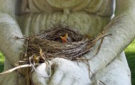 baby robin sitting in a nest