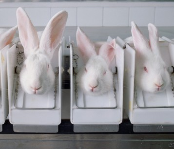 Rabbits in stocks being tested on for cosmetics