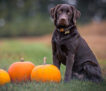dog sitting in the grass next to pumpkins - Humane Society Christmas Cards