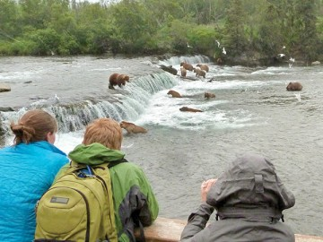 Grizzly bears feeding on salmon in the Brooks River