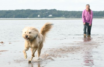 Minnow the dog running in the water on the beach