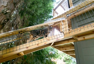 cat climbing in catio