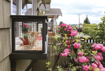 cat in windowbox catio