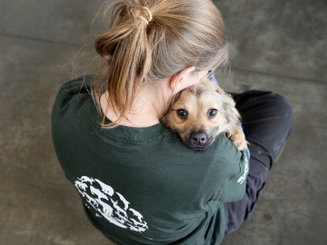 Rescued dog being comforted by a volunteer