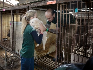 Dog being removed from a cage by HSI rescuers at a South Korea dog meat farm.