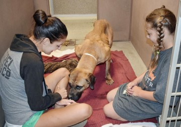 Florence, a dog meat rescue, sniffs volunteers at a shelter in the US.