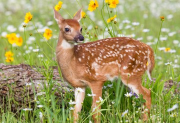 Deer fawn in the grass near some flowers