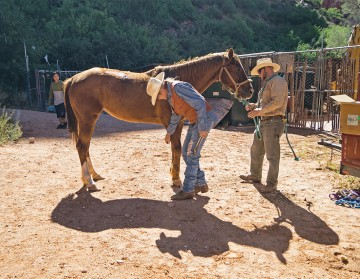 Supai horse getting foot inspected