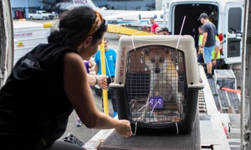 Volunteer with a dog in a crate at an airport