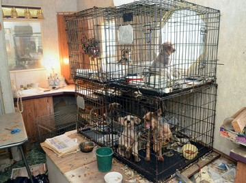 Dogs in stacked cages at a puppy mill