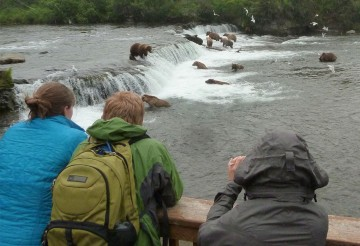 People safely overlooking grizzly bears in water