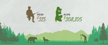 Wildlife is worth $308,105 alive and only $315 dead