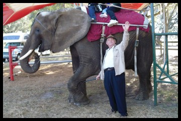 Nosey the elephrant being forced to give rides at a fair